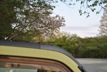鹽竈神社で鹽竈桜を見に行こう