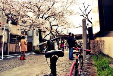 今にも落ちてきそうな桜の下で